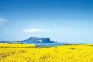 Jeju mùa xuân - Đắm say và dữ dội