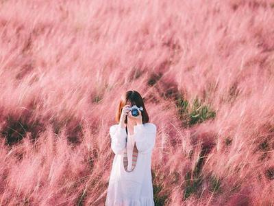 Khám phá cánh đồng cỏ hồng Muhly của cố đô Gyeongju...